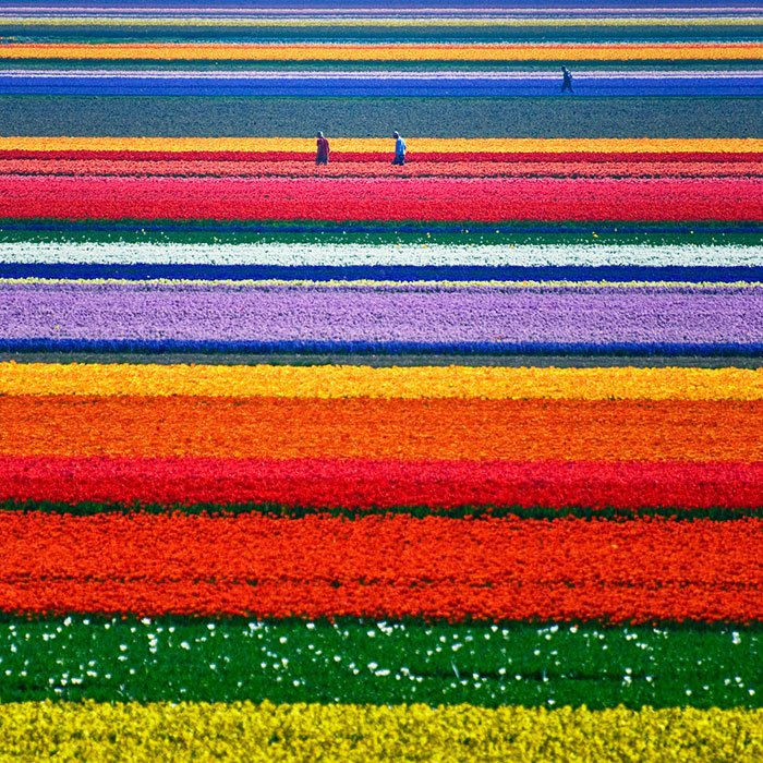 15 Incredibly Colorful Spring Flower Fields Around The World