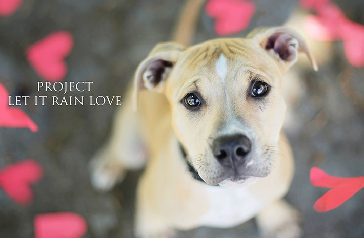 Let It Rain Love: 19-Year-Old Photographer Takes Beautiful Shelter Dog Pictures To Help Find Them New Homes