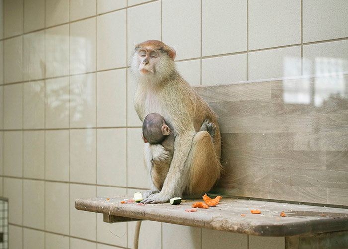 Lost Behind Bars: Depressing Photos Of Zoo Animals Show The Need For Change
