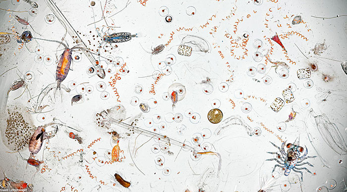 This Is How A Single Drop Of Seawater Looks Magnified 25 Times
