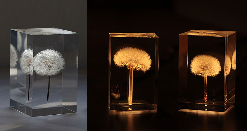REAL Dandelions Turned Into Gorgeous OLED Lights by Takao Inoue