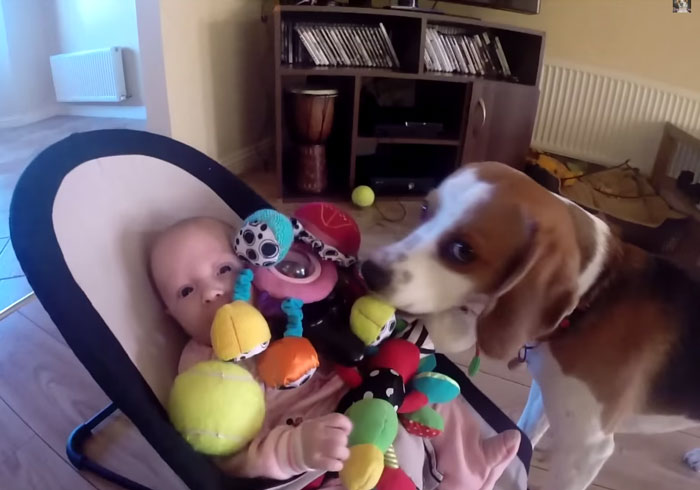 Watch This Dog's Adorable Apology After He Steals A Baby Girl's Toy