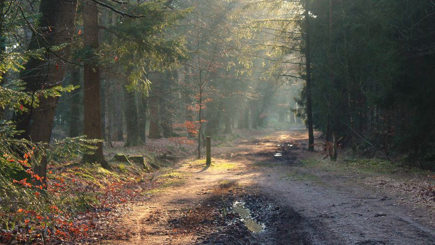 Haagse Bos, The Netherlands