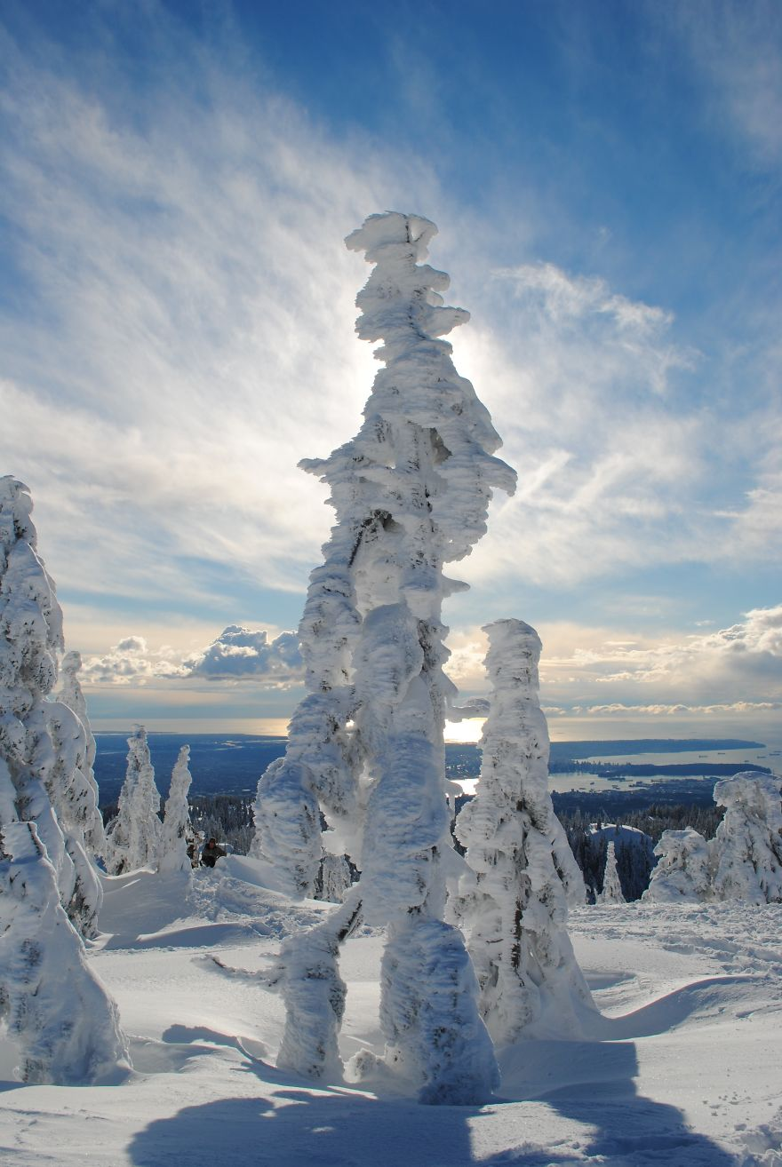 Ghost Tree Forest Mt. Seymour , British Columbia.