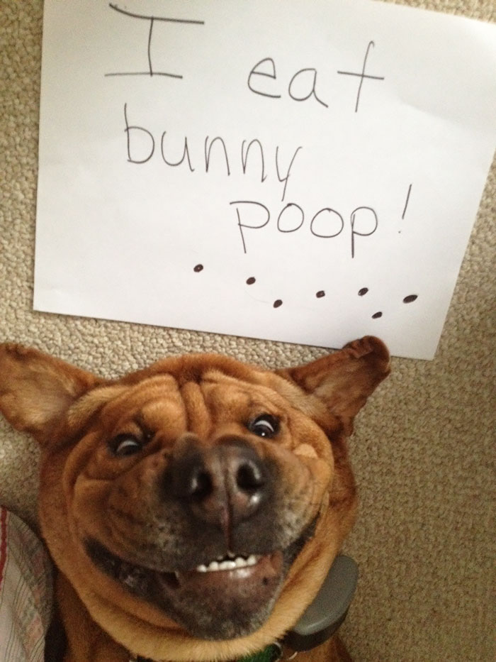 78 Asshole Dogs Being Shamed For Their Crimes