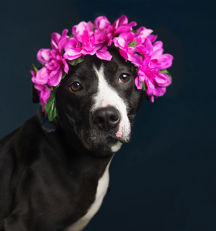 Beautiful Shelter Dogs' Portraits Reveal Their Personalities