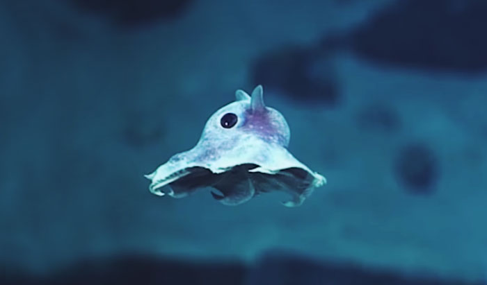 Strange Never-Before-Seen Sea Creatures Discovered 20,000 Feet Under The Sea