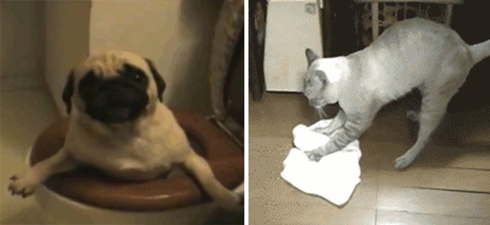 Funny Pets Helping With The House Cleaning