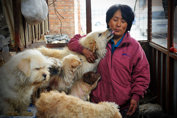 Chinese Woman Travels 1,500 Miles And Pays $1,100 To Save 100 Dogs From Chinese Dog-Eating Festival