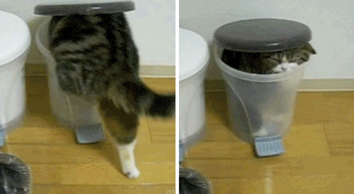 17 Moments When Trash Made Us Laugh (Cats And Otters Involved)