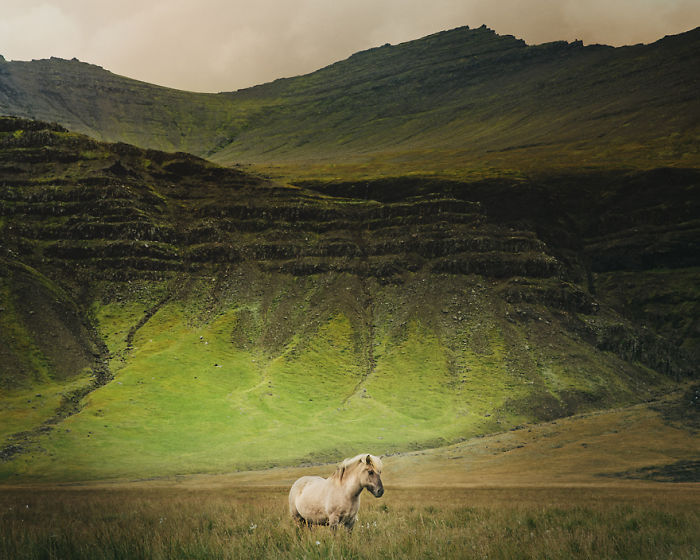 I Captured Icelandic Horses That Live In A World Of Green