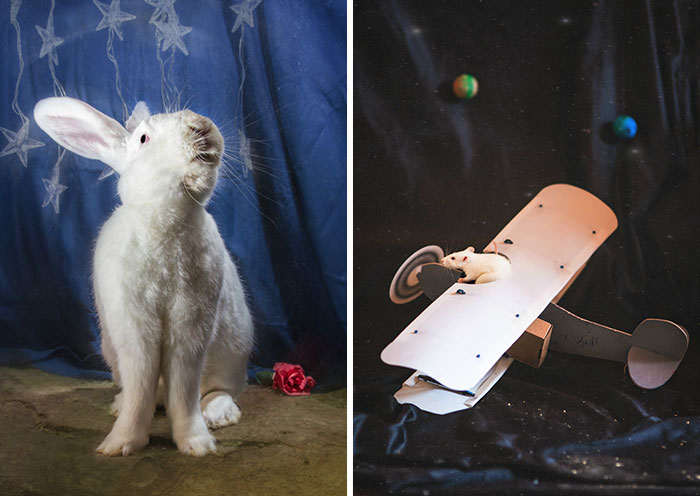 I Photographed Ex-Lab Animals As Characters From The Little Prince To Help Them Find Homes