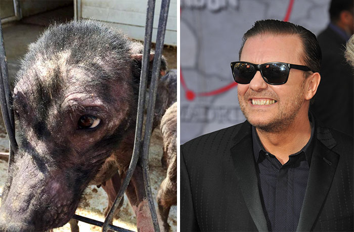 Ricky Gervais's Tweet Saves 650 Starving And Abused Dogs