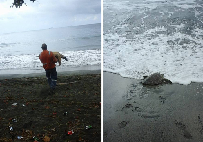 Man Buys Turtles From Food Market And Releases Them Back To The Sea