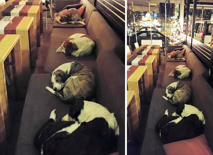This Coffee Shop Lets Stray Dogs Sleep Inside Every Night When The Customers Leave