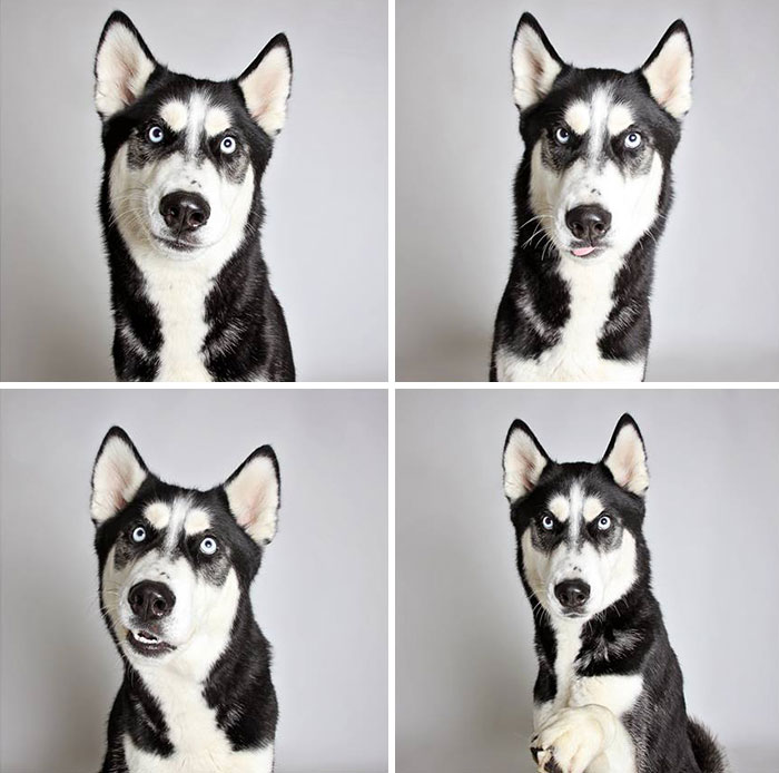 Shelter Dog Photobooth Pics Helps More Pups Find Forever Homes (25 pics)
