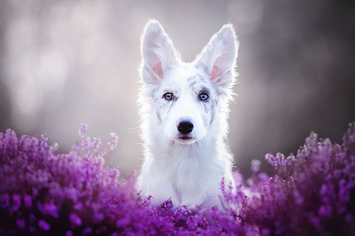 This Polish Photographer Takes The Most Beautiful Dog Photos Ever (13 Pics)