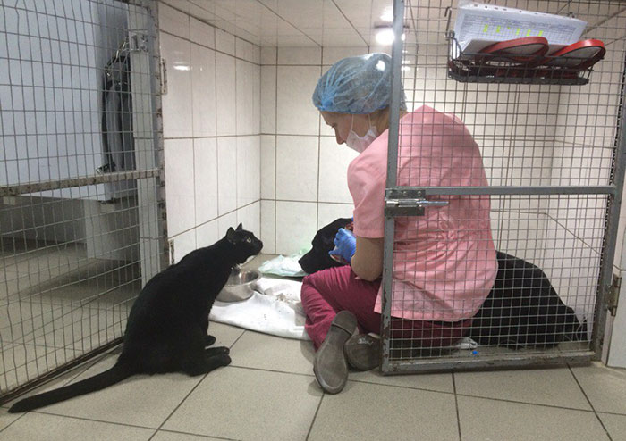 Rescue Cat Who Can't Walk Becomes Nurse, Helps Sick Animals And Even Saves Their Lives
