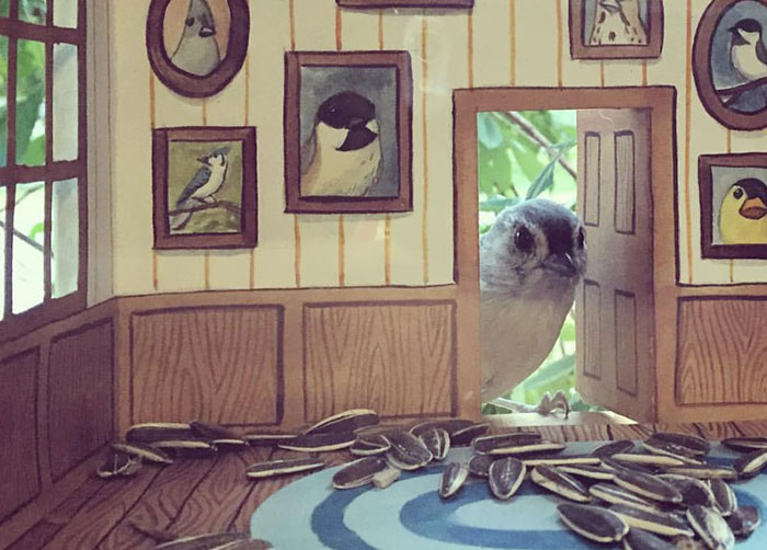 Woman Builds Tiny Houses For Birds That Visit Her