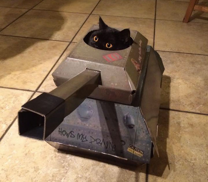 This Company Makes Cardboard Tanks, Planes And Houses For Cats, And Your Master Needs Them Right Meow!