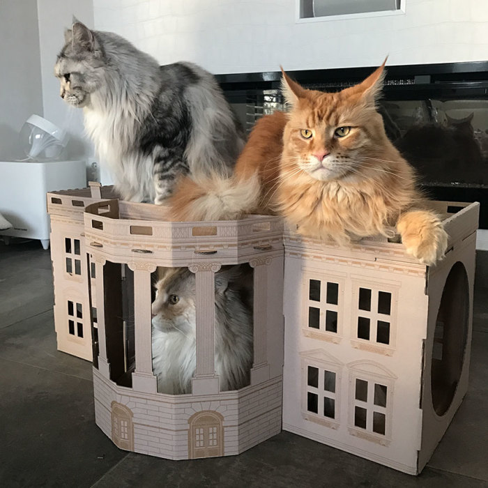 Unlike President Trump, These Cats Know Exactly What To Do In The White House