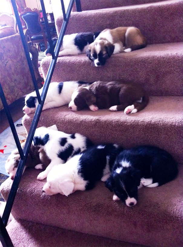 First Time Going Down The Stairs On Their Own. Apparently The Trip Was Exhausting