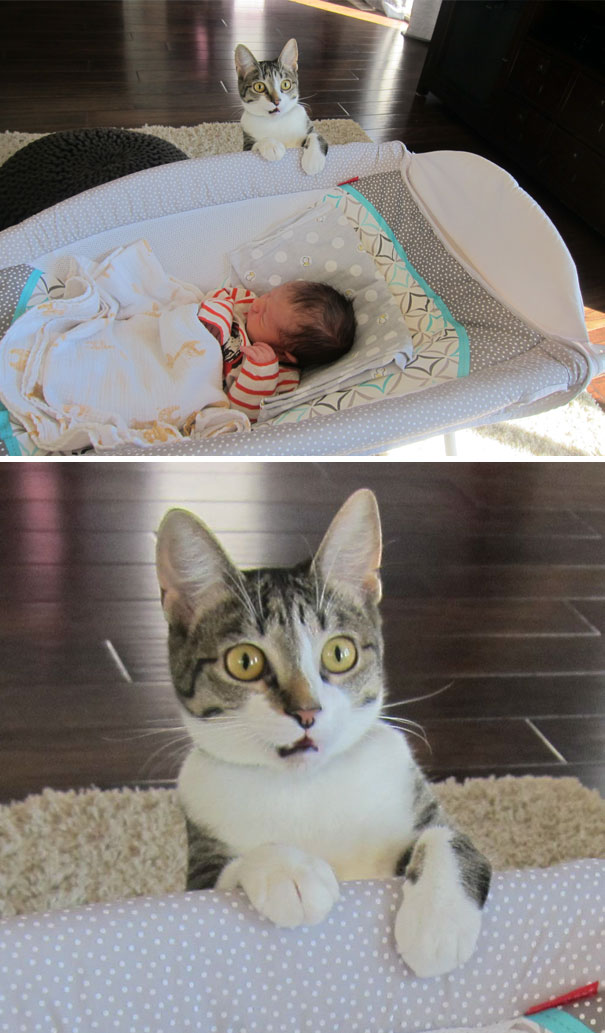 We Forgot To Tell Our Cat That We Had A Baby
