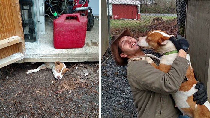 Man Saves Dog From Being Trapped Under Shed, Realizes He Saved Something More