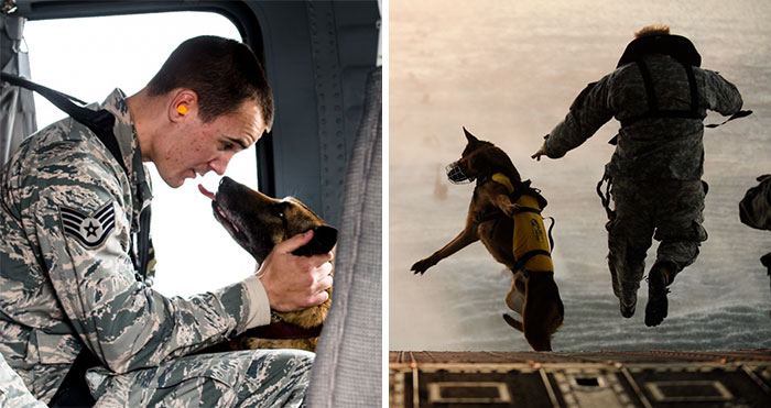 77 Powerful Photos Of Service Dogs That Capture Their Incredible Loyalty