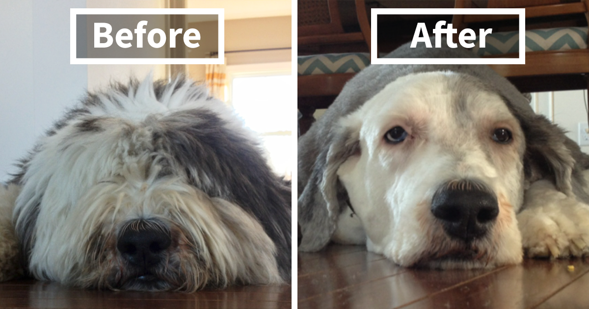 128 Dogs Before And After Their Haircuts (Add Yours)