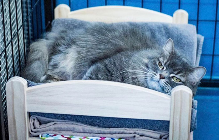 IKEA Donates Doll Beds For Shelter Cats, And It's Just Too Adorable