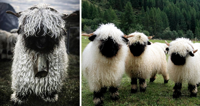 27 Of The Most Metal Animals Ever