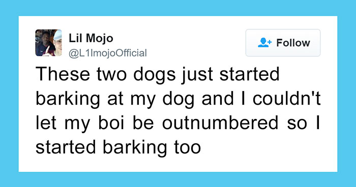60 Funny Dog Tweets That Are Too Relatable