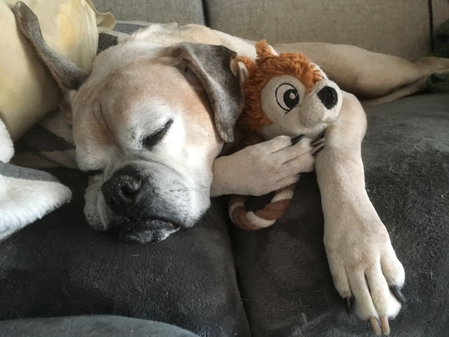 Chico, 12yrs, Montreal, Canada