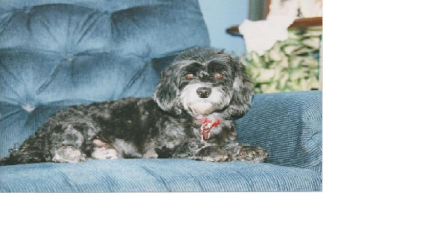 Chiquitica 15 Years Old Miami, Florida