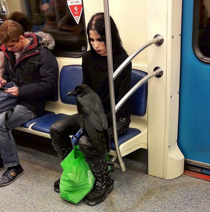 176 Of The Weirdest People Ever Spotted Riding On The Subway