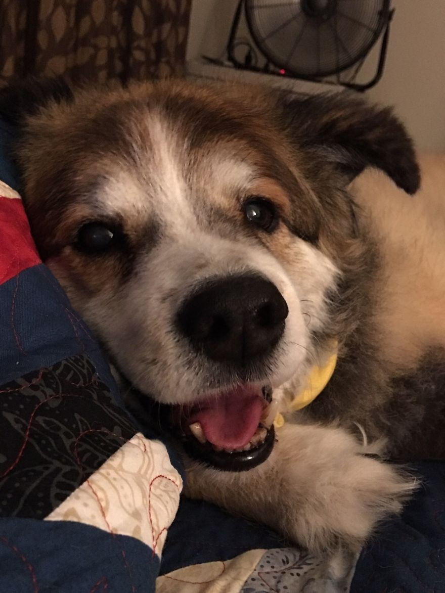 Jack, My Best Friend At 14 Years Old.