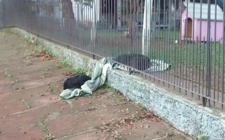 Woman Surprised To See Her Puppy Drag Its New Blanket Outside, But Then She Sees This