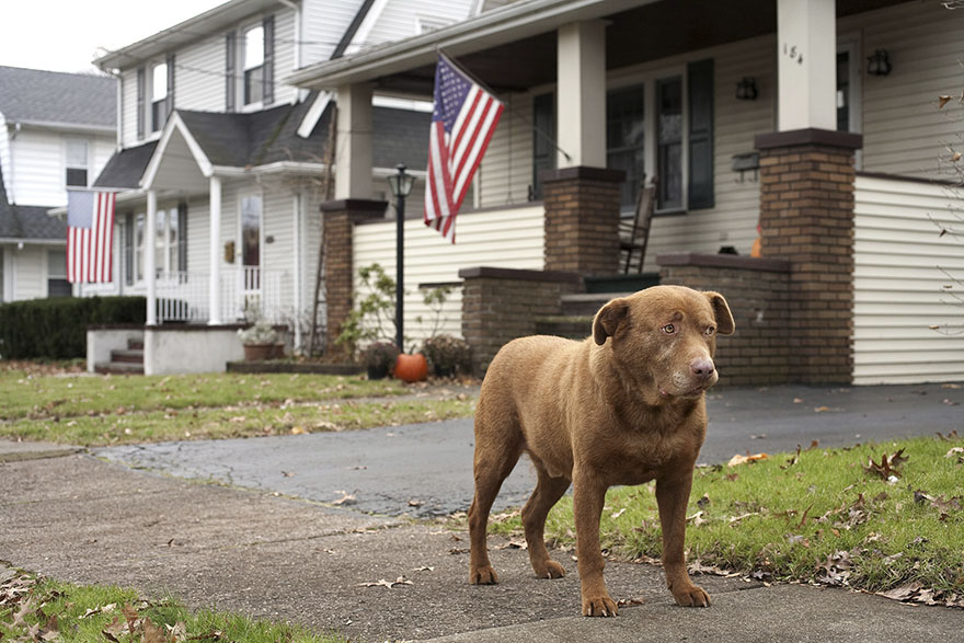 Joey, 9 Years Old Hawthorne, New Jersey