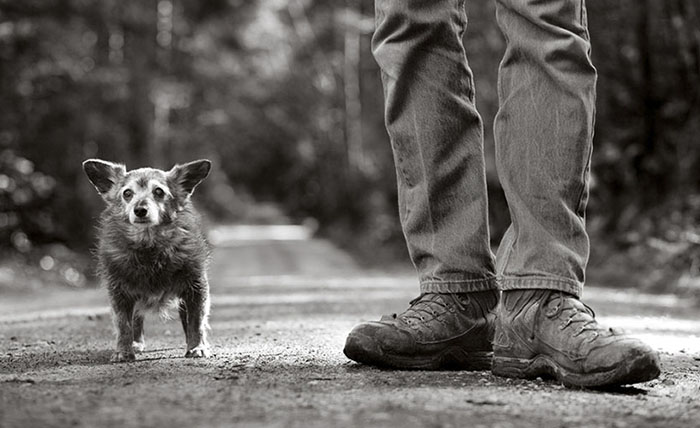 125 Old Souls Of Elderly Dogs Captured By Nancy LeVine