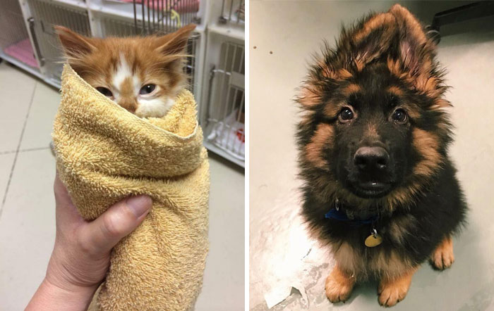 People Who Work With Animals Are Sharing Their Cutest Photos, And We Can't Get Enough
