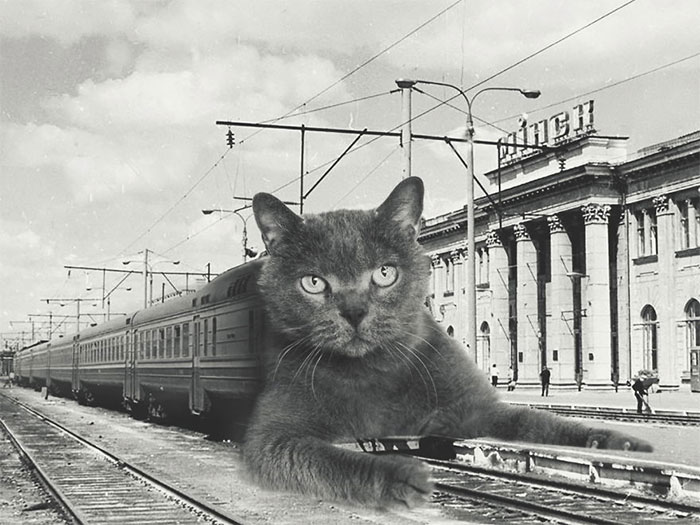 I Photoshopped Cats Into New Year's Photos From The Former USSR