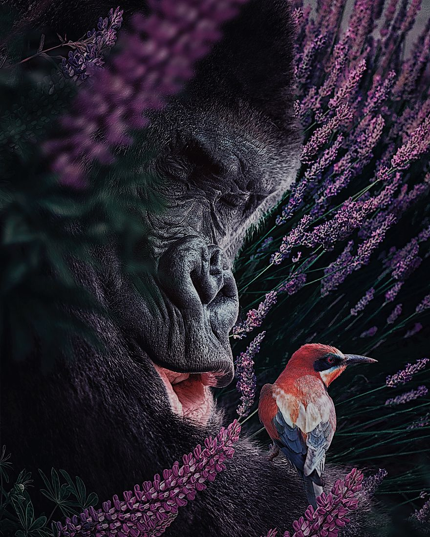 This Visual Artist Uses His Magical Skills To Raise Awareness For Engangered Species