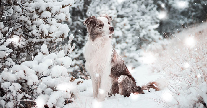 I Capture The Wildness Of My Dogs In A Winter Wonderland