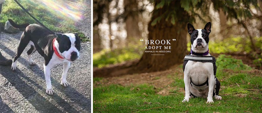 Can A Photo Save A Life? I Photograph Shelter Dogs To Find Out