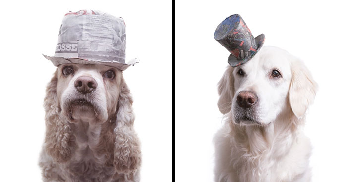 I Upcycle Paper Into Cute Hats For Dogs