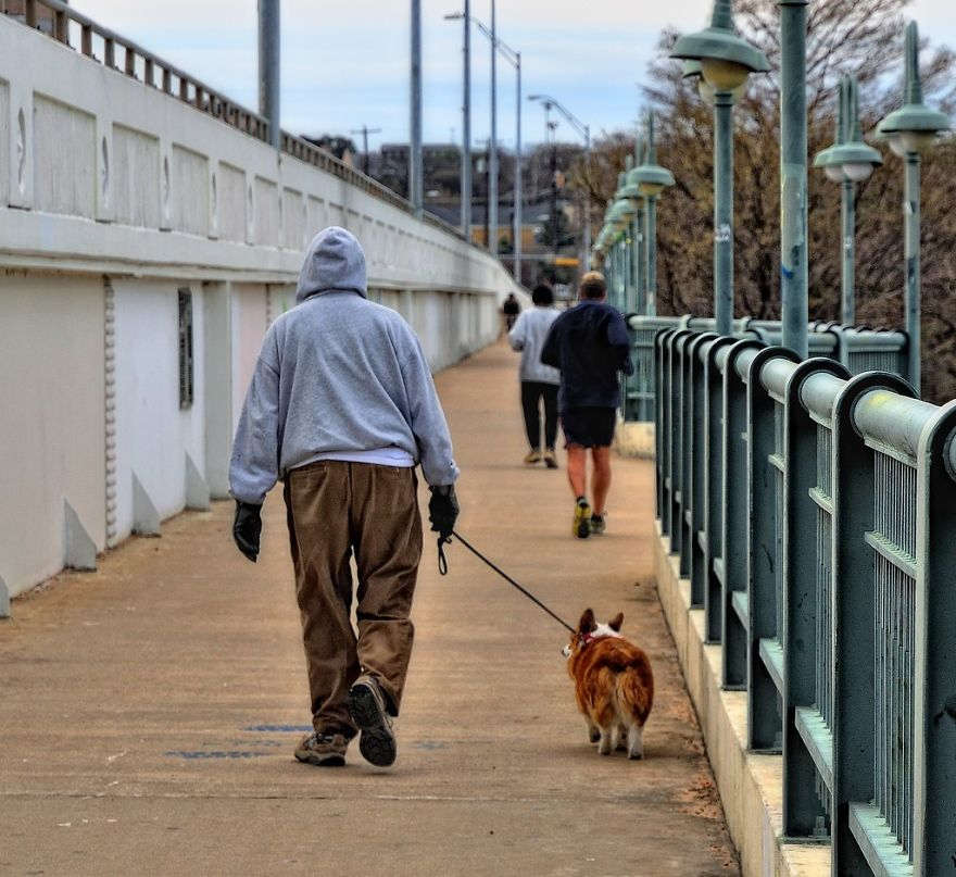 In Turin, A Dog Owner Is Fined If He Walks The Dog Less Than Three Times A Day