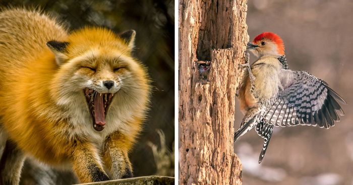 I'm A Disabled Veteran Who Turned Into A Wildlife And Nature Photographer (29 Pics)