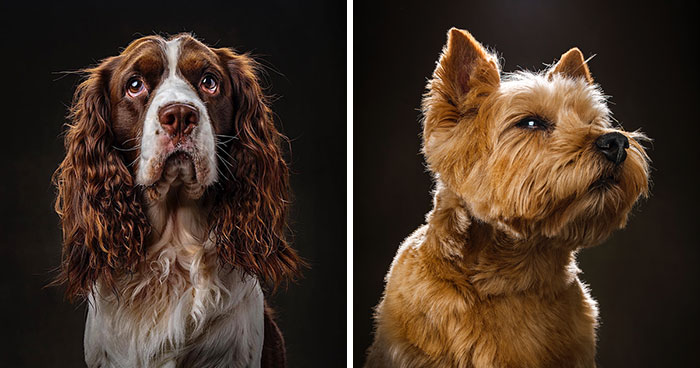 15 Pics Of Witty 'Dogographies' By National Geographic Photographer Who Decided To Take A Year Off