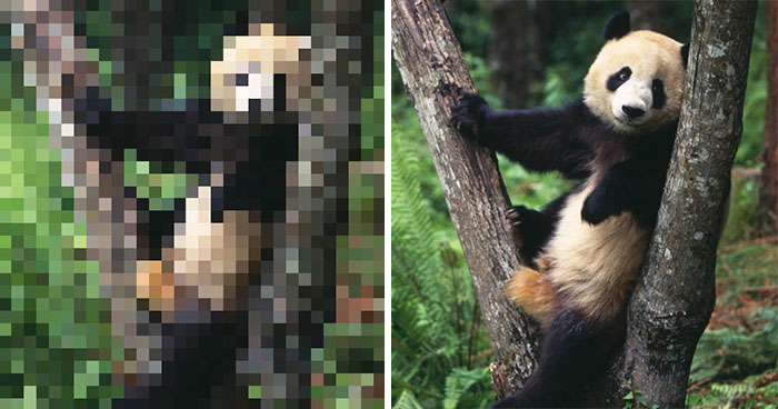 These 22 Pics Are Composed Of As Many Pixels As There Are Animals Still Alive In These Species